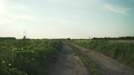 toprak : walking on dirt rural road in summer evening focus close to camera Stok Video