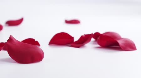 okvětní lístky : red rose petals falling on white background in slow motion, 180fps Dostupné videozáznamy