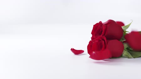 valentin nap : Slow motion of three red roses with falling petals on white background, 180fps Stock mozgókép