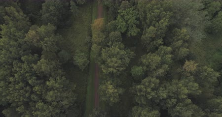 tiro : Aerial shot forward fly faced down over wild park or forest in cloudy day