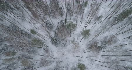 pinho : Aerial backward fly with tilt over winter frozen pine forest Vídeos