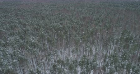 назад : Aerial backward fly over winter frozen pine forest