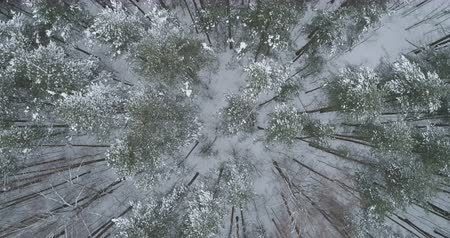 назад : Aerial top view backward fly over winter frozen pine forest