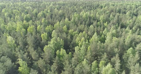 назад : Aerial backward flight over mixed forest on a sunny summer day