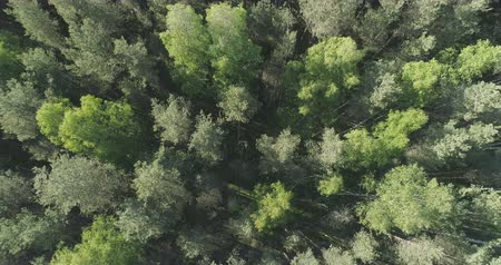 ascend : Aerial top view ascent over mixed forest on a sunny summer day Stock Footage