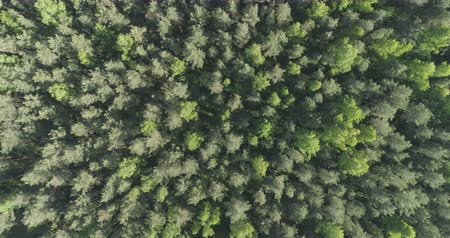 birch tree : Aerial top view rotate flight over mixed forest on a sunny summer day Stock Footage