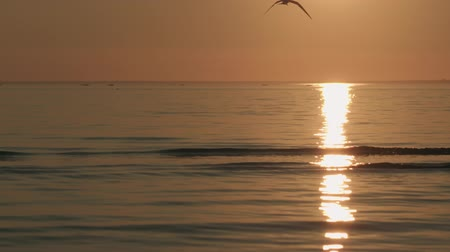 glare : Slow motion small waves on a beach at sunset with seagull flying around Stock Footage
