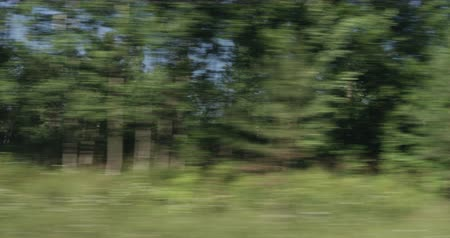 driving plate : Driving plate green mixed forest on summer sunny day side view from fast moving car