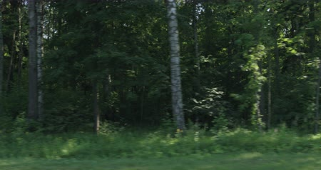 driving plate : Driving plate green mixed forest on summer sunny day side view from moving car Stock Footage