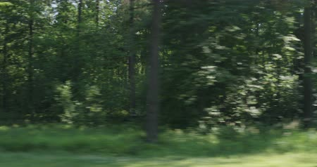 oak : Driving plate green mixed forest on summer sunny day side view from fast moving car
