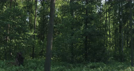 driving plate : Driving plate side view of green mixed forest on summer sunny day from slow moving car Stock Footage