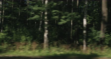 driving plate : Slow motion green mixed forest on summer sunny day side view from moving car Stock Footage