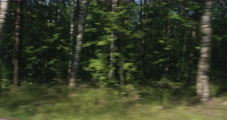 driving plate : Slow motion driving plate side view of green mixed forest on summer sunny day