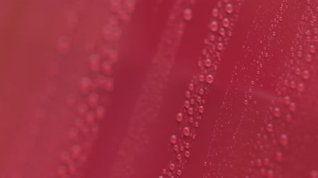 myjnia samochodowa : Slow motion handheld pan of water drops on red car with hydrophobic coating