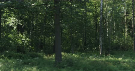 driving plate : Driving plate side view of green mixed forest on summer sunny day Stock Footage