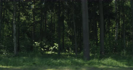 driving plate : Slow motion driving plate side view of green mixed forest on summer sunny day from slow moving car Stock Footage