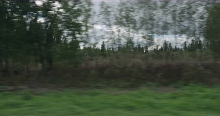 driving plate : Slow motion driving plate side view of mixed forest in early autumn from moving car Stock Footage