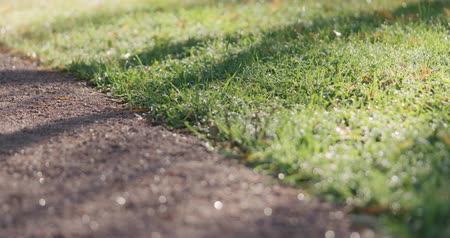 low light : Slow motion focus pull of park path with green grass and fallen leaves in the morning Stock Footage