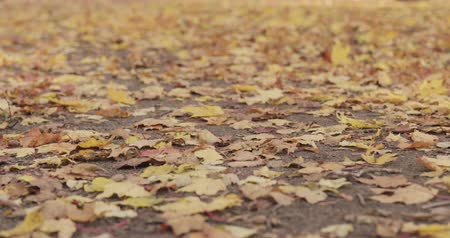 fallen leaves : Slow motion focus pull of fallen autumn leaves on the ground