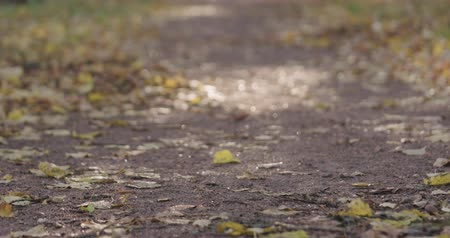fallen leaves : Slow motion pan of fallen autumn leaves on city alley Stock Footage