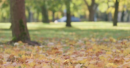 fallen leaves : Slow motion low angle shot of maple leaves in autumn park Stock Footage