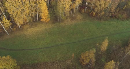 oak : Aerial forward tilt shot over autumn rural landscape with field and forest in the morning Stock Footage