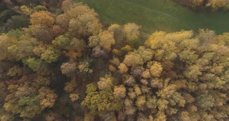 autumn leaves : Aerial top view forward shot over field and autumn forest in the morning