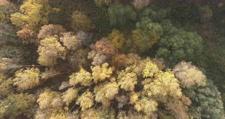 oak : Aerial top view forward shot over stream in autumn forest in the morning