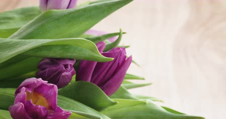 i love you : Closeup pan of bouquet of purple tulips on wood table with i love you greeting card