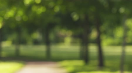 freshness background : real lens blur of park in sunny day loopable