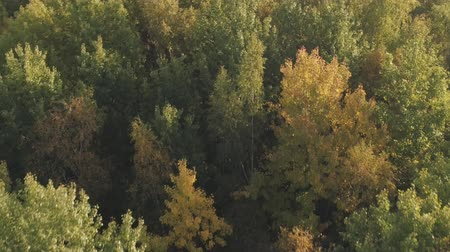 назад : Aerial backward flight over autumn trees in forest