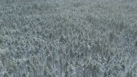 назад : Aerial backward fly over frozen mixeb forest with pine and birch trees Стоковые видеозаписи