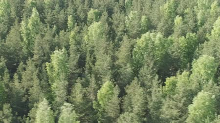 oldalt : Aerial side flight over mixed forest on a sunny summer day