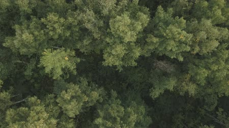 İskandinavya : Aerial flying back top view over summer forest on a cloudy day