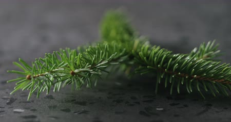 mermer : Slow motion fly in from spruce twig to happy new year card Stok Video