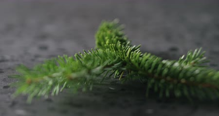 focus pull : Slow motion focus pull of spruce twig on terrazzo countertop Stock Footage