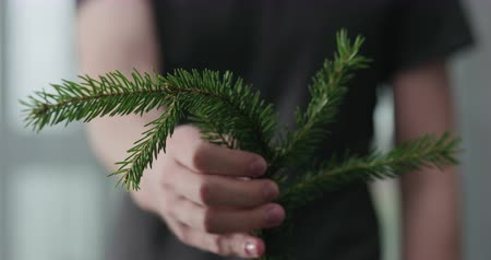 gałązki : Slow motion young man shows green spruce twig Wideo