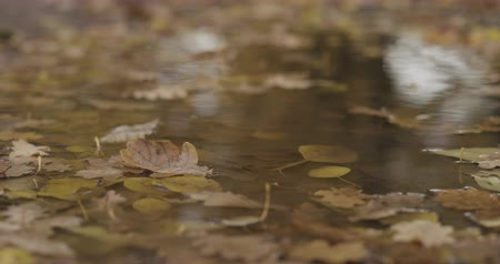 linden : Slow motion handheld shot of autumn leaves in a puddle