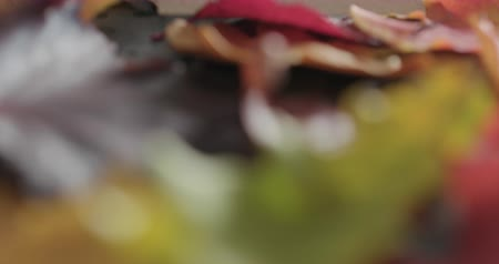 linden : Slow motion pan shot of composition with autumn leaves with paper card