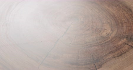 nozes : Rotating shot of walnut wood trunk