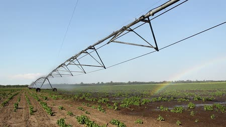 terep : Sprinklers Watering Field