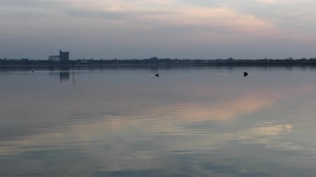 lasting : swan with beautiful lake sunrise Stock Footage