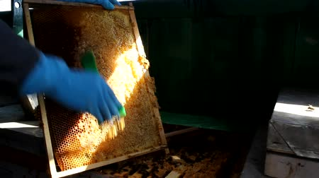 apiary :  Bees And Hives ,bees in apiary,beehive,Beekeeper