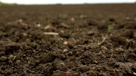 talaj : Close-Up of Soil in Field Stock mozgókép
