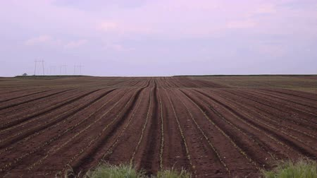zboże : agriculture soil land field landscape Wideo