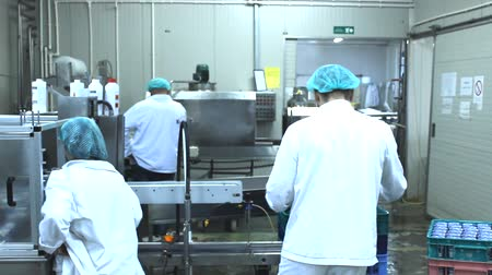 proces : workers in the factory yogurt and milk Dostupné videozáznamy