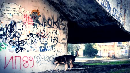 grafiti : ghetto wijk hond Stockvideo