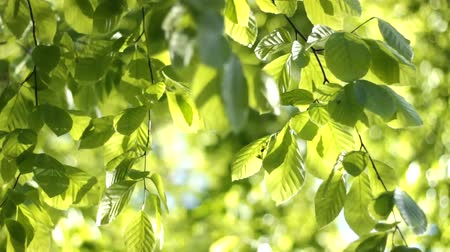 natura : Nature Leafs Sunny day Wideo