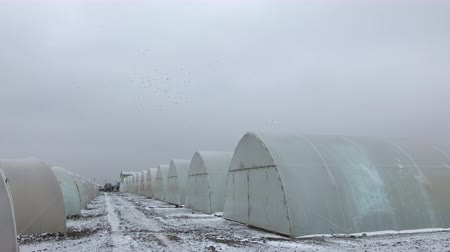 winter snow on greenhouses Vídeos