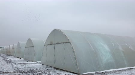 winter snow on greenhouses Stock Footage